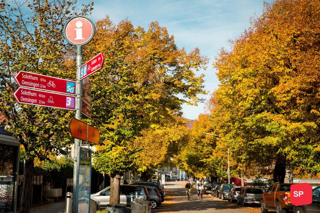 Begrünungsoffensive: Die Stadt soll grüner und zugänglicher werden!